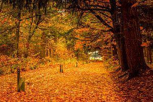 een pad bezaaid met bladeren in de herfst