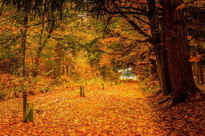 een pad bezaaid met bladeren in de herfst van Marc Goldman