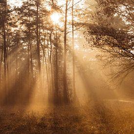 Les chauds rayons du soleil dans une forêt brumeuse sur Patrick Verhoef