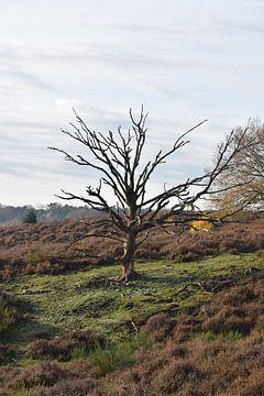dode boom van Marcel Bouman