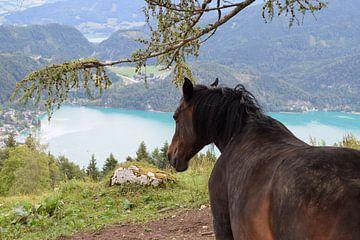 Cheval avec lac sur Andrea Fuchs