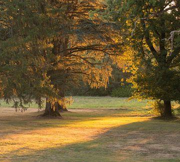 Vroege zon door de bomen van Michel Knikker