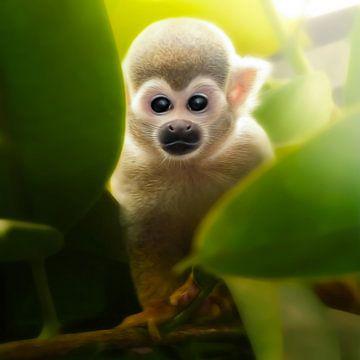 baby monkey van Silvio Schoisswohl