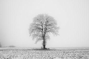 Winterlandschap, eenzame boom van Gert Hilbink