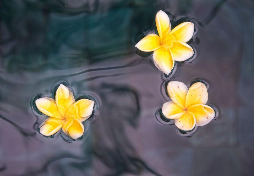Stillleven van gele bloemen  van Marcel van Balken