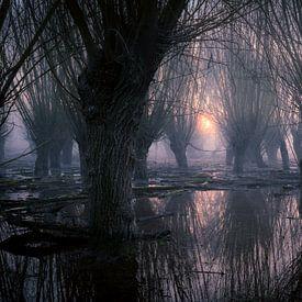 Weidenwälder unter Wasser von Yvonne Albe