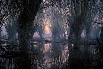 Weidenwälder unter Wasser