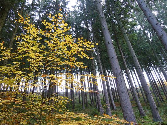 Solo in het bos van Lilian Huijben