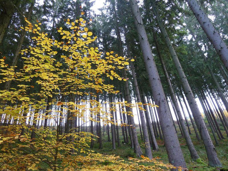 Solo in het bos