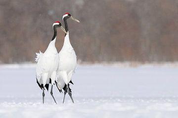 Japanse Kraanvogels van Harry Eggens