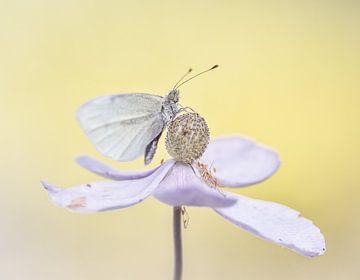 Romantischer Schmetterling von natascha verbij