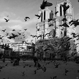 Notre Dame de Paris von Jasper van de Gein Photography
