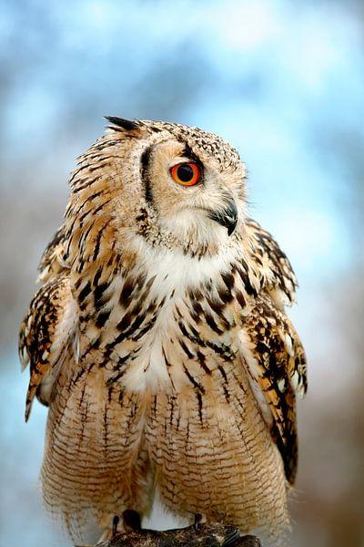 Eagle owl sitting sur Jan Brons