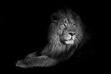 helder gele gloeiende ogen, verkleurd lichaam op een zwarte achtergrond. Een krachtig leeuwenmannetj van Michael Semenov