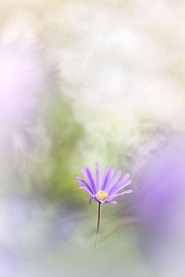 Few see the flowers van Bob Daalder