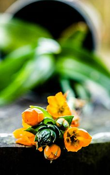 Gevallen bloem van Annemarie Ostendorf