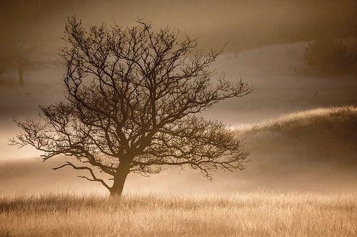 Solitaire boom in nevel van Linda Raaphorst