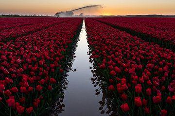 Tulpen aan de gracht van Louise van den Broek