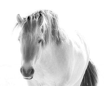 Pferd von Hennie Zeij