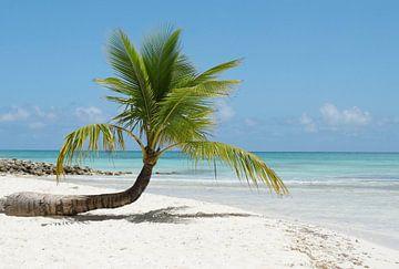 Caribbean island of Saona van