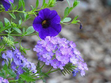 Blue Flowers van Wieja van der Kamp
