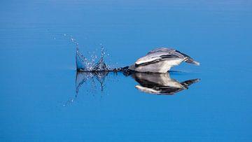 Blue Heron dives for fish von Inge van den Brande