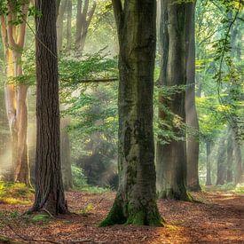 Het Oude Bos van Lars van de Goor
