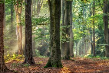 Der alte Wald