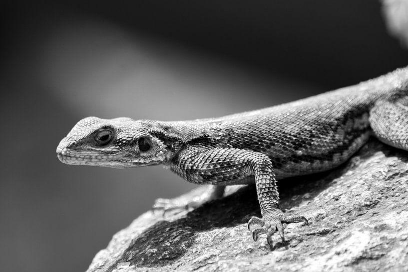 Salamander van Gerwin Hoogsteen