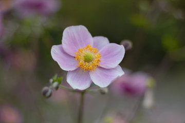 Lila bloempje met geel hart van Anke Winters