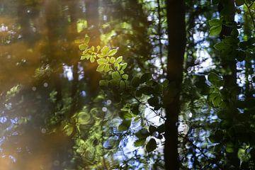 Sommerliche Spiegelung im Wald 2