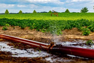 In het buitengebied van Roermond besproeit een boer zijn land. Alle waterbeheerders in Nederland sna van Niels Wenstedt