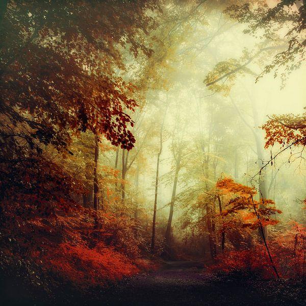 Enchanted forest  van Dirk Wüstenhagen