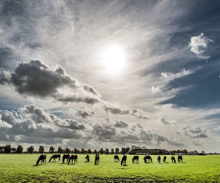 Paarden in het Friese landschap van Harrie Muis