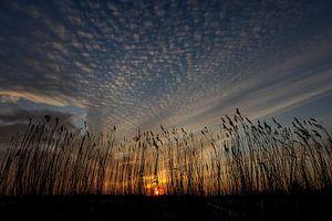 Zonsondergang achter het Riet