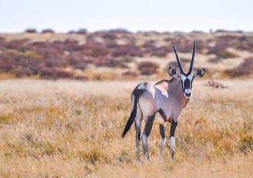 Oryx von Robert Styppa