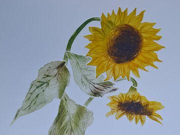 Zonnebloemen   B von Frank van Veen