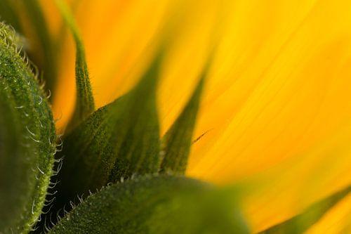 Sunflower van Greetje van Son