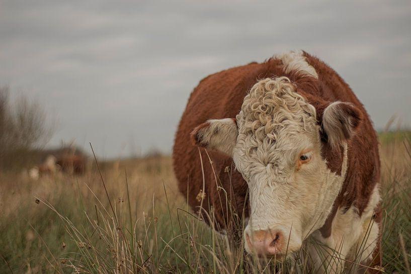Bruine koe von Rutger Leistra
