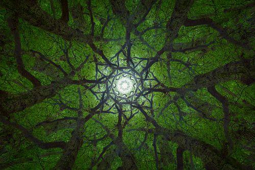 Mandala Trees (2)