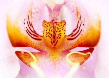 Close-up van een orchidee in roze en geel van Caroline van der Vecht