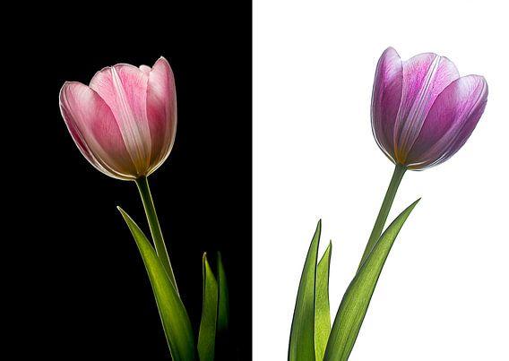 Tulp op zwart en wit van John Bouma