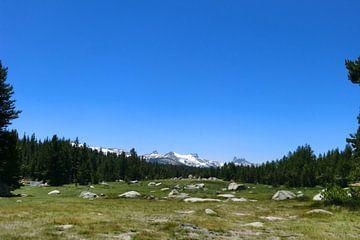 Yosemity park van Desiree Barents