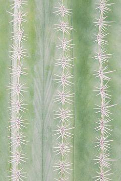 Der zerbrechliche Kaktus von Martin Bergsma