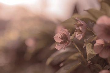 bloemen part 126 van Tania Perneel
