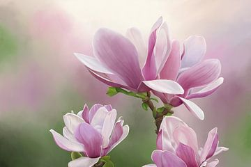 Gemälde von Magnolienblüten von Tanja Udelhofen