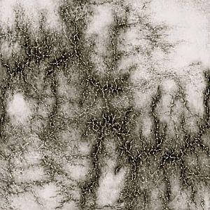 Grey Marble Pattern Black And Silver Vined van