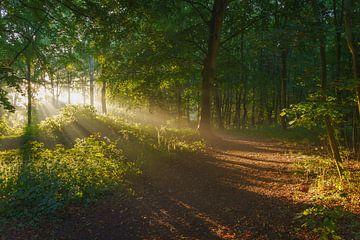 Les rayons du soleil levant. sur justus oostrum