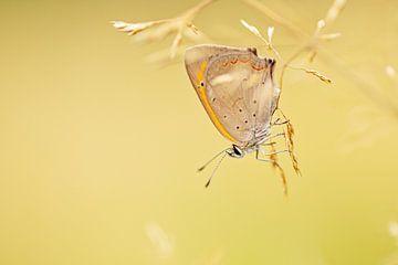 Kleiner Schmetterling auf dem Kopf von Roosmarijn Bruijns