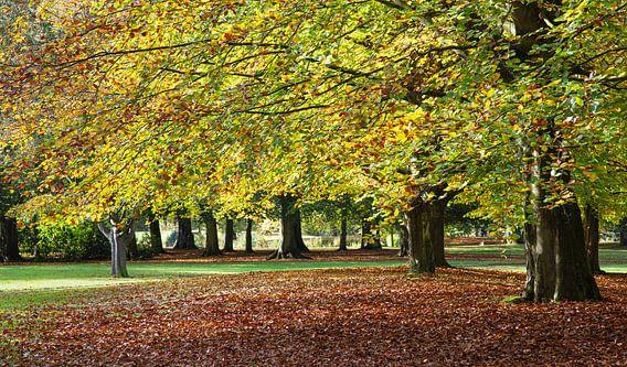 Bomen in herfstkleuren